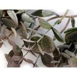 Branche eucalyptus artificiel 37cm / Décoration Noël, Couronne de l'Avent