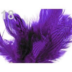 18 - Plumes rayées violet 4 à 12 cm